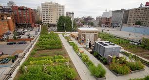 Food-Roof-Farm