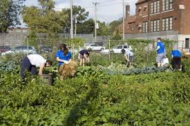 New-Roots-Urban-Farm